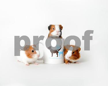 2016 February Small Animal Gallery