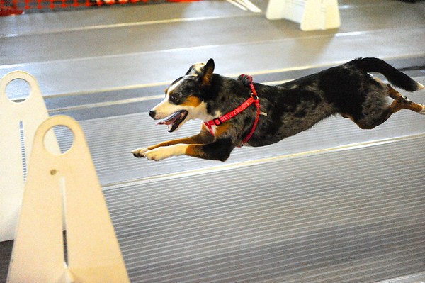 Flyball Events