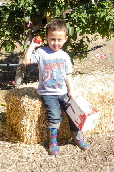 Apple Pickin 2013