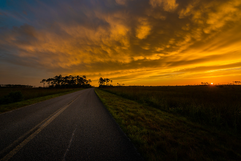 Everglades (2 of 37).jpg