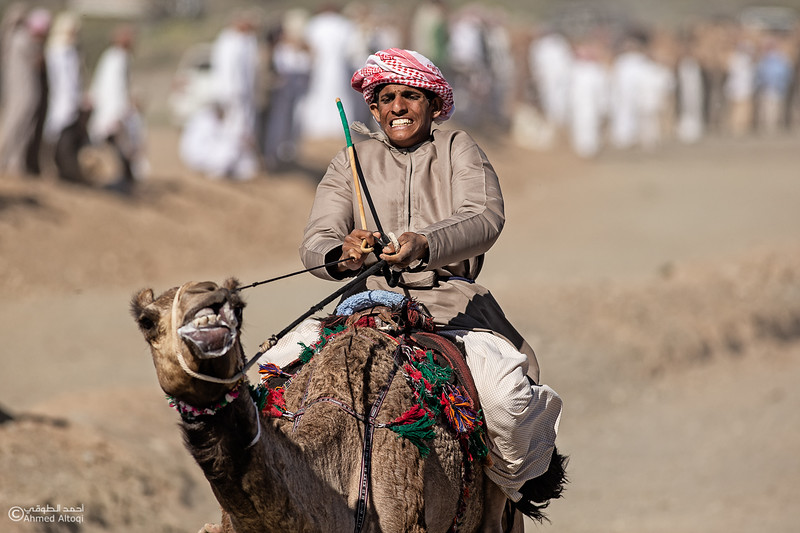 IMGL0214 copy2- Camel Race.jpg