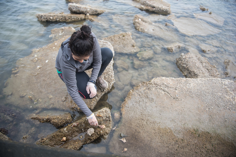 Volunteer Ana Salamanca places hermit crab shells on a set of rocks off the Corpus Christi Bay.