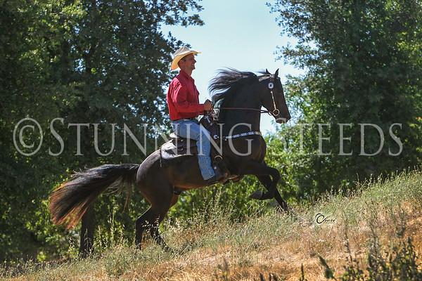 ALB-Stilwell Thunder-under saddle