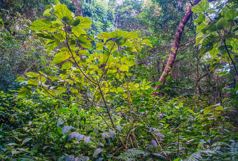 Costa Rica_Rainforest-6.jpg