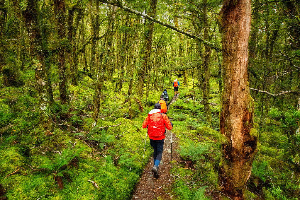Hiking the Greenstone Track in New Zealand