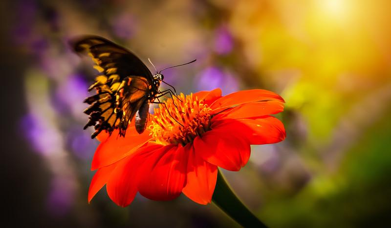 Butterfly-062.jpg