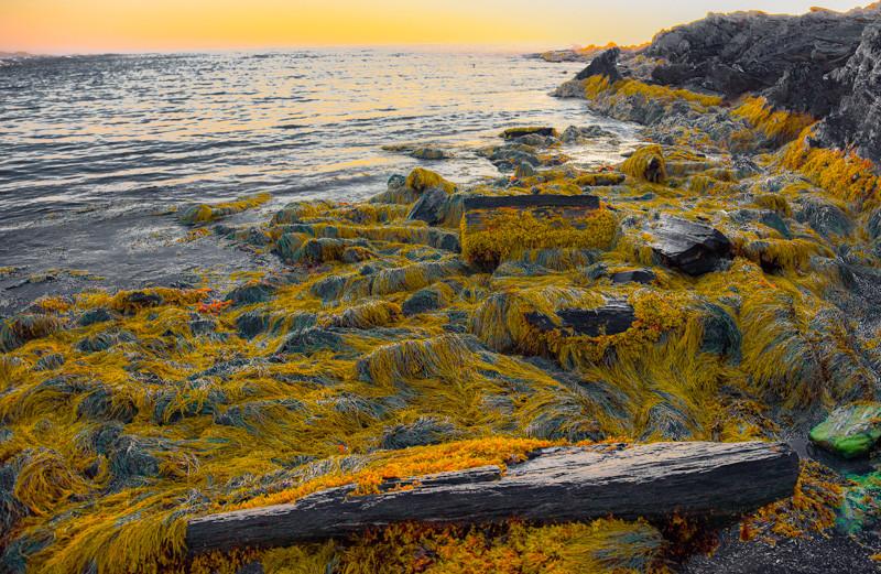 Maine Coast 49