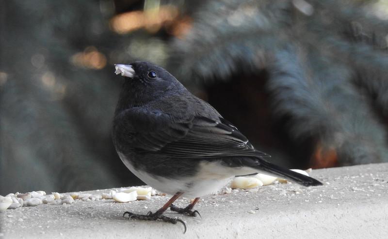 birds (223).JPG