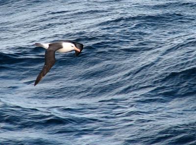 Falkland Islands - 2008