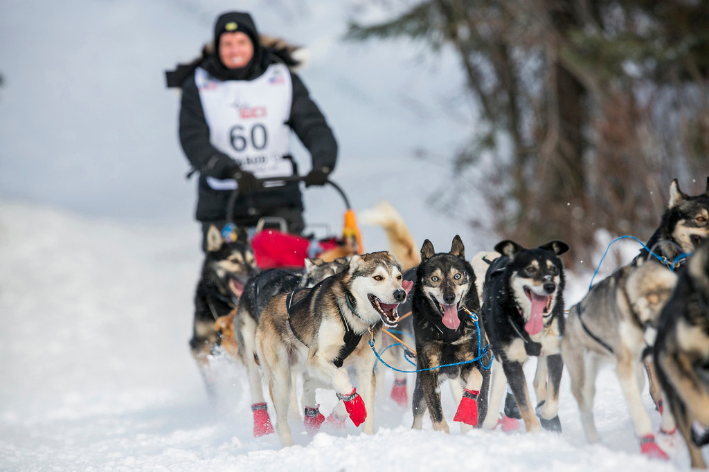 . Cindy Abbott\'s team charges down the trail after the re-start of the Iditarod dog sled race in Willow, Alaska March 3, 2013. From Willow, the race runs for almost 1000 miles as it crosses the state.   REUTERS/Nathaniel Wilder
