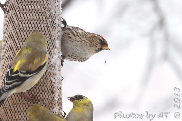 2013-03-24 Yardbirds