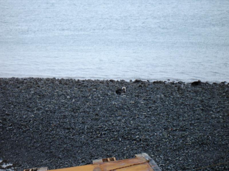 Alaska 2008 056.jpg