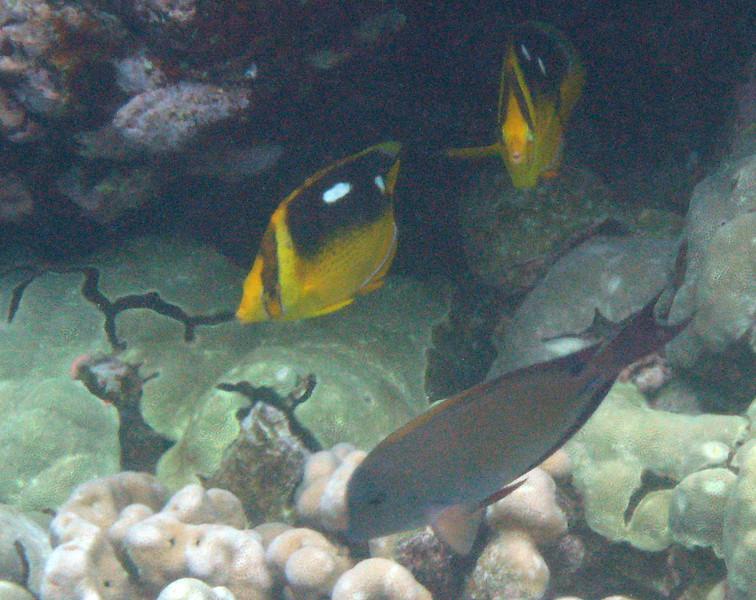 501- 20080416- Hawaii 20-Snorkelling IMG_0744.jpg