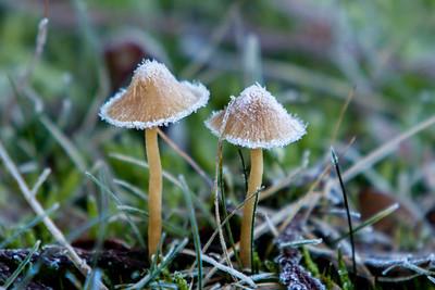 Fungi and Slime Mold
