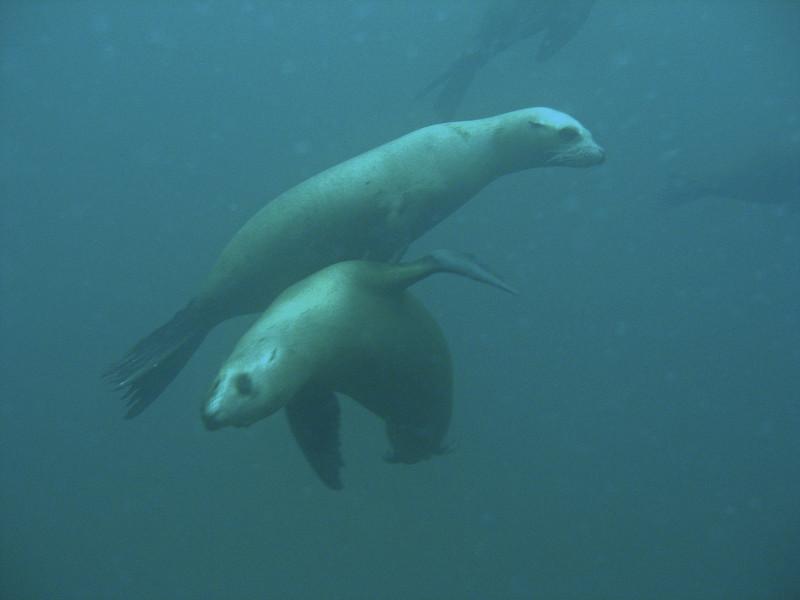 CTN Seals5.jpg