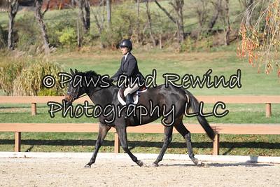 Hunter Ring: Beginner Rider/Hunter Under Saddle