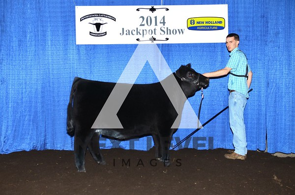 Penn Cattlemen's 2014 Heifer Backdrop