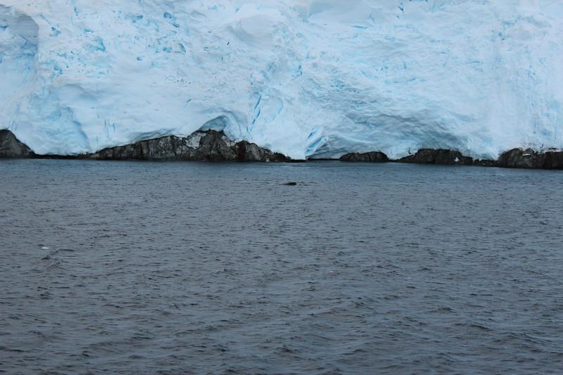 Antarctica 152.JPG