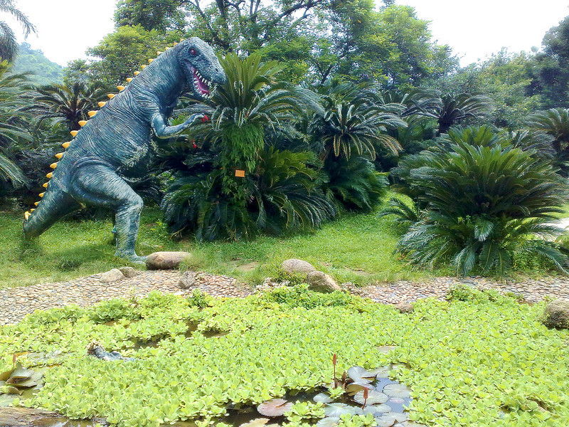 20090901_895 Tyranossaurus Rex, not having his fill of bubble-tea, hungrily eyes off some cycads.  Overall, the Guangzhou Botanical Gardens is perhaps twice the size of Melbourne's own Botanical gardens. There are large orchid exhibits, camellia and azelia gardens and lakes full of lotus and water lilies. Sadly, early September is the wrong time to view almost all those flowers!