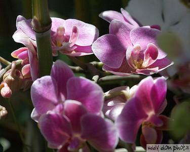 NY Botanical Garden Orchid Show 2008