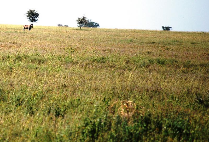Serengeti (155).JPG