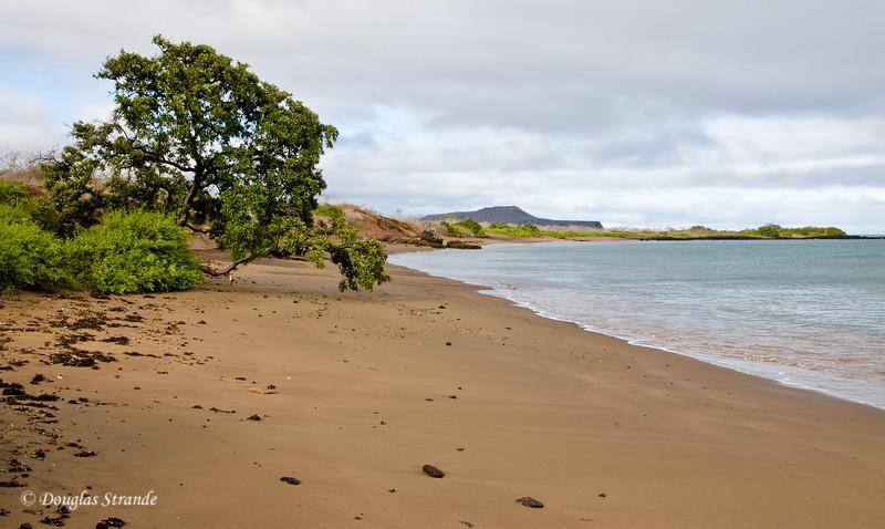 The beach at Cormorant Point, Floreana Island
