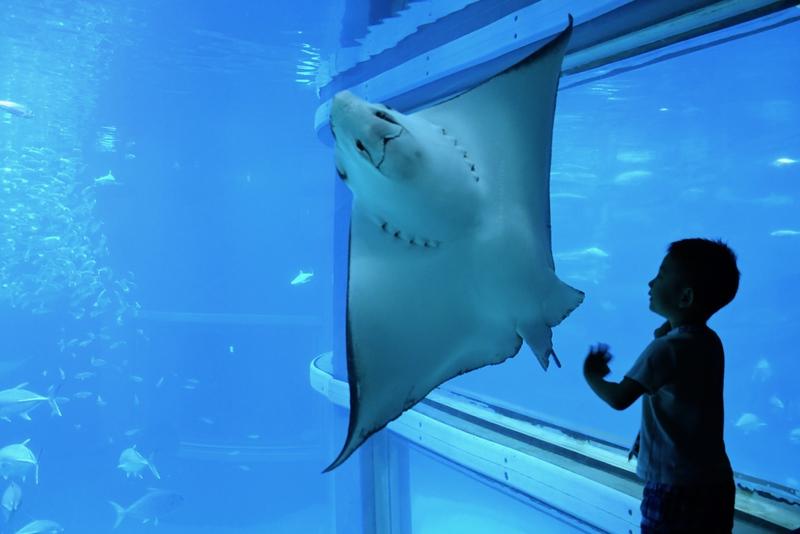 Osaka Aquarium Kaiyukan. Photo Credit: Meeh/Shutterstock.com