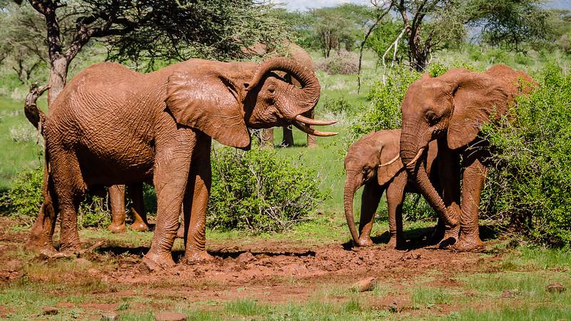 Elephants-0207.jpg