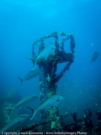 Underwater & Scuba Diving
