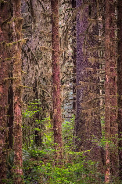 OLYMPIC NATIONAL PARK - 2021