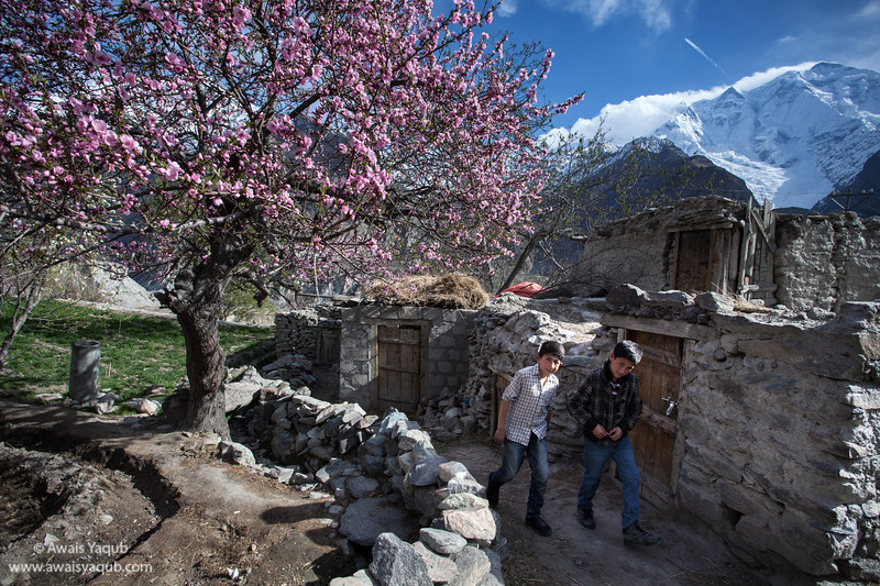 Along the Silk Route