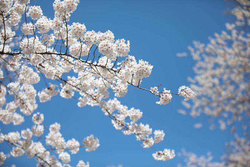 Floral & Botanical