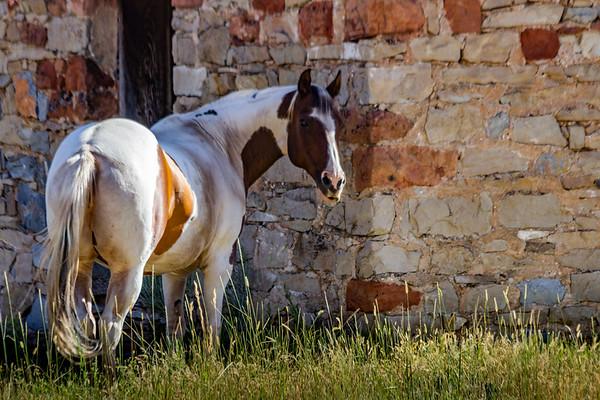 Horse Finding Shade in Morgan Utah