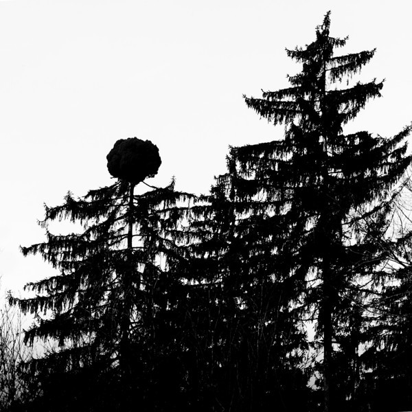 Tree silhouette 13