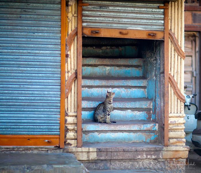 20111111_jodhpur2_8699.jpg