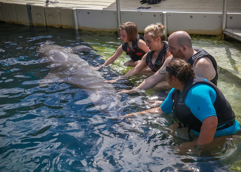 2019 August Dolphin Quest-136.jpg
