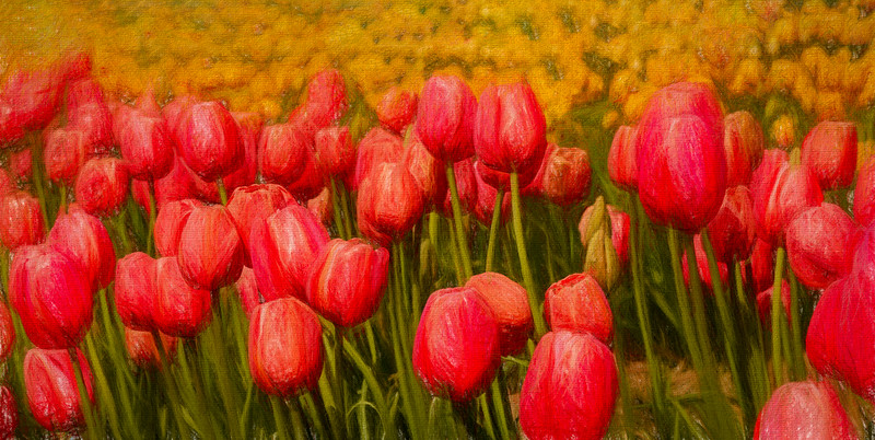 JWS_9598 tulips MFimpressions glow-Edit.jpg