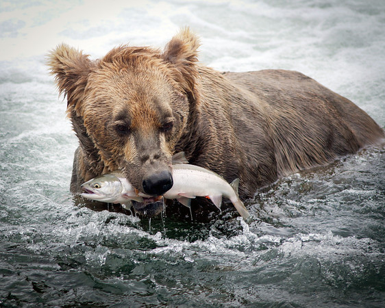 Wildlife Video