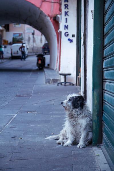 Amalfi 6618.jpg