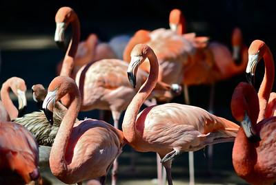 San Diego Zoo - Oct 9, 2011