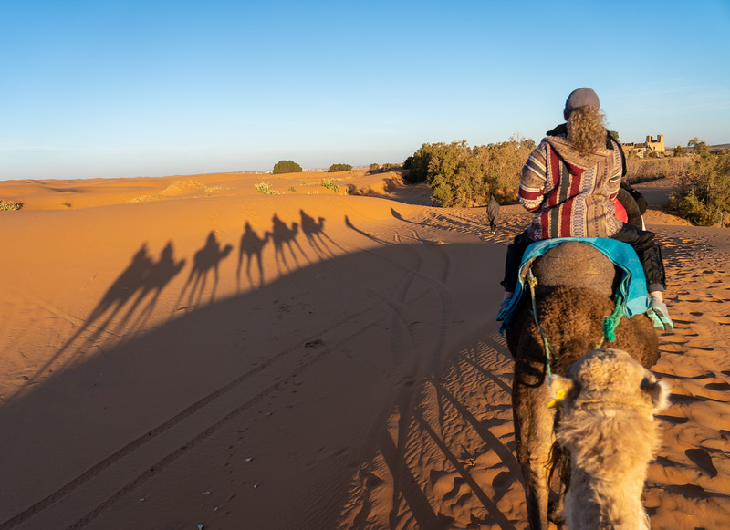 Riding camels in the Sahara Desert in Morocco