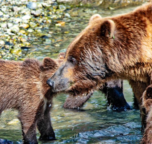 Bear close up.jpg