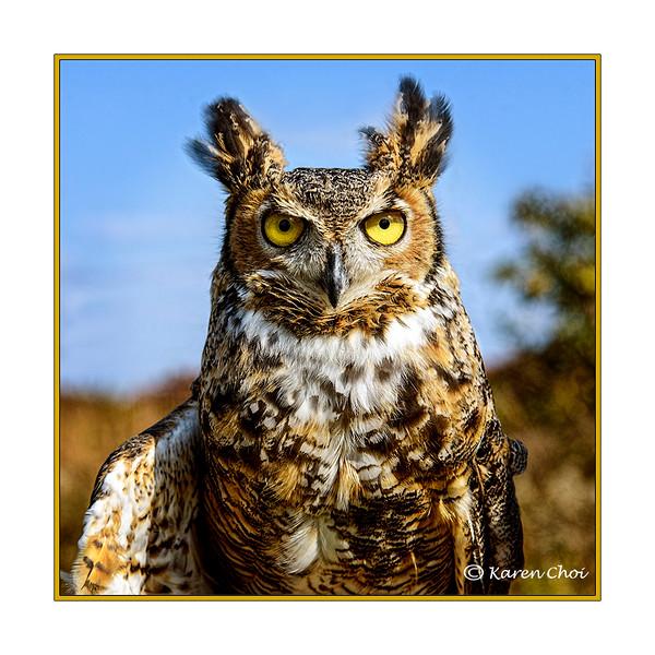 Great Horned Owl 1 sm.jpg