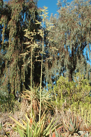 San Diego Botanische tuin