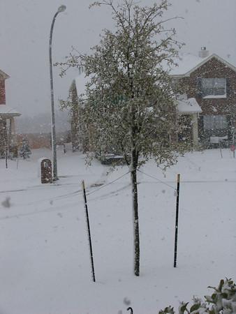 Snow Falling on Tx