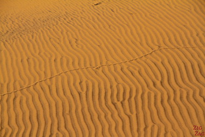 Tommy living desert: trace from snake, Namibia