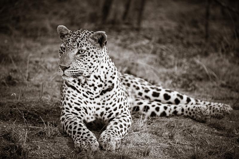 LeopardHills-20191028-1116.jpg