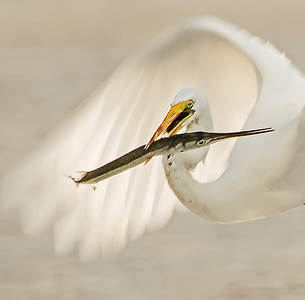 Nature/Bird