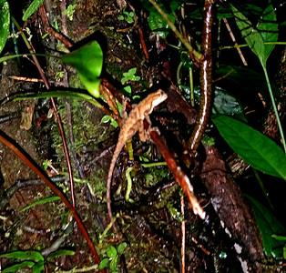 Night Hike Creatures  (4)