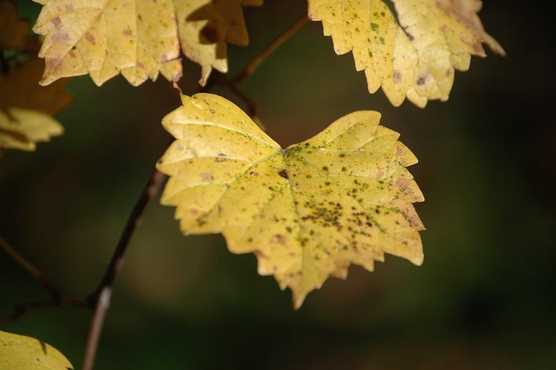Fall Color 018.jpg